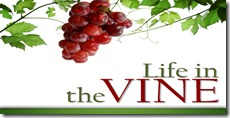 life-in-the-vine-2